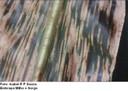 Mancha por Cercospora (Cercospora zeae-maydis; C. sorghi f.sp maydis)